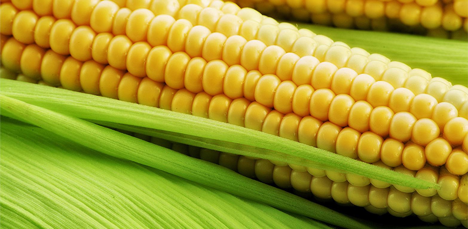 Мікродобрива для кукурудзи