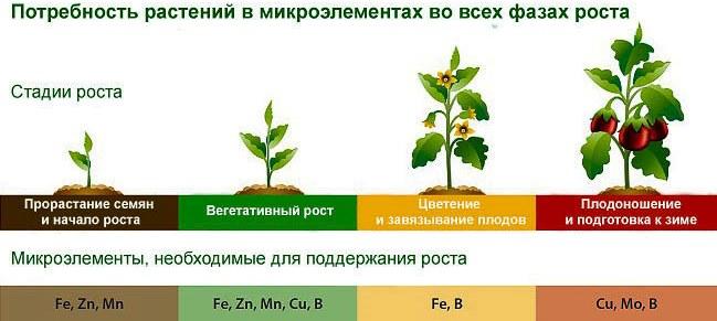 Стадии роста растений - внесение микроудобрений